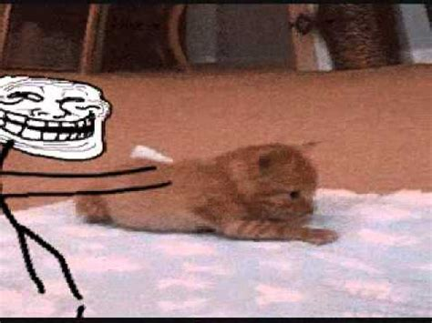 Troll Face Pushes over a cat - YouTube
