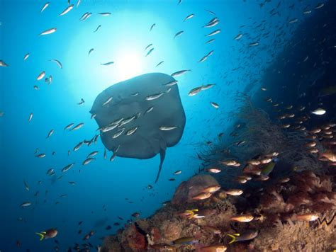 The Great Barrier Reef - BIG4 Touring Route