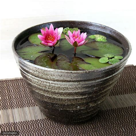 chanet | Rakuten Global Market: Handmade water lily pot (pot fish) Mashiko-yaki Aya (SAI) Princess Lily pot carbide Lily bowls, fishbowl, fish